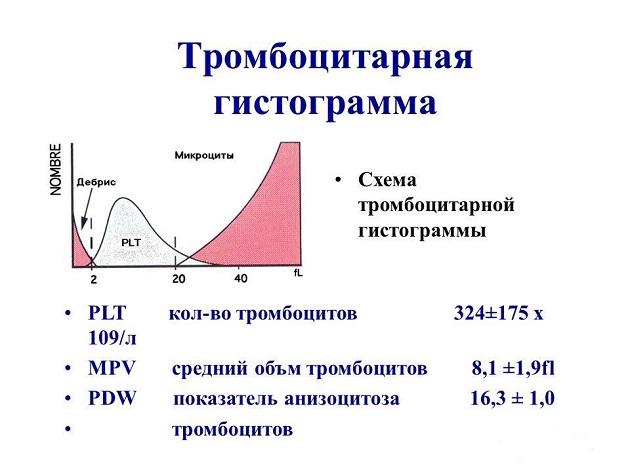 Что означает повышение тромбоцитов в анализе крови Медицинская справка для работы на высоте Улица Церковная Горка