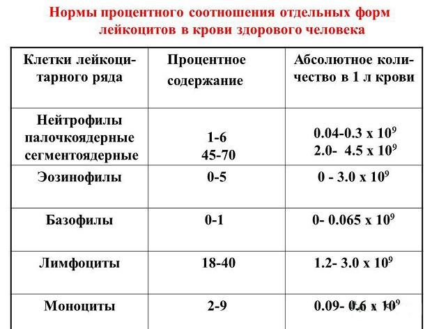 Анализ крови повышенное содержание белых кровяных телец Справка из онкодиспансера Улица Большая Якиманка