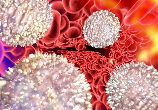 Лейкоциты в крови