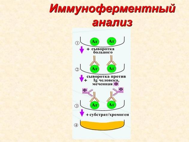 разновидность паразитов в организме человека фото